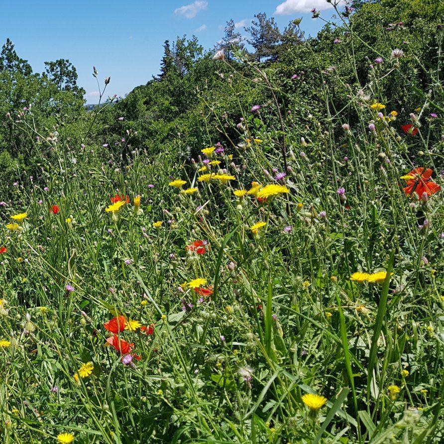 spring wild flowers rhodes greece